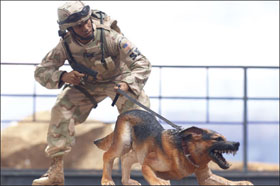 McFarlane's Military Action Figure - Series 3 Air Force Security Forces K9 Handler Action Figure
